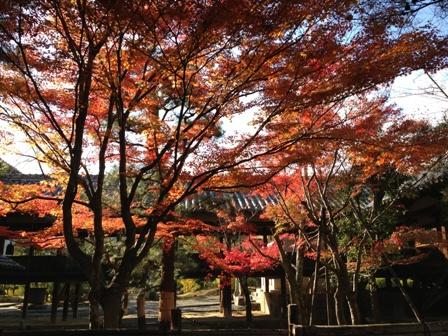 秋色の嵐山を散策。宝筺院で静かに紅葉鑑賞できました。