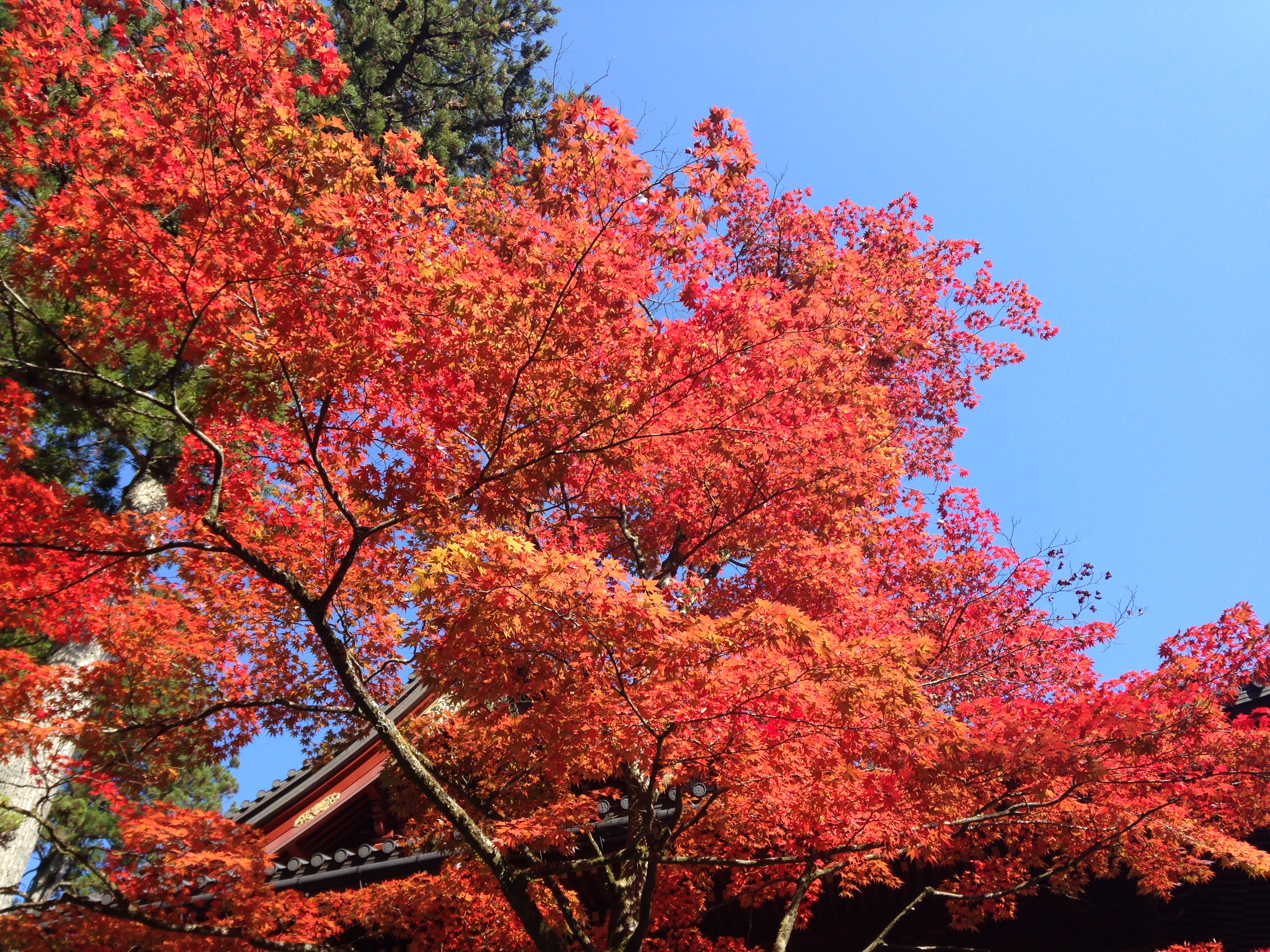 【東京から日帰り】電車で日光へ!世界遺産と中禅寺湖の紅葉