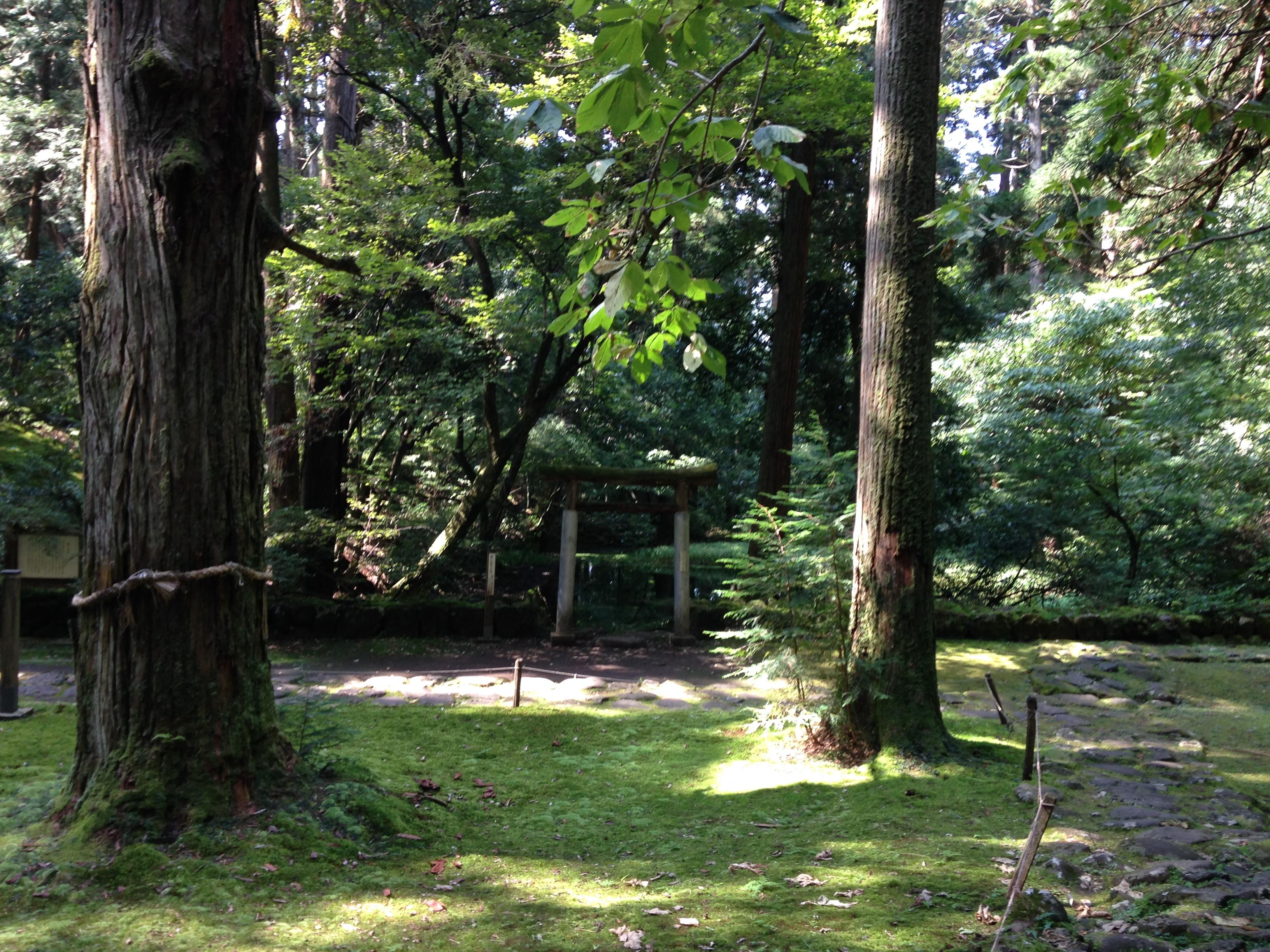 福井の美しい苔寺、白山平泉寺(平泉寺白山神社)