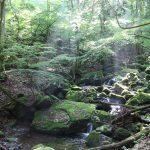 神秘的な苔の森。山梨大月、高畑山&倉岳山登山はJR中央線でラクラク
