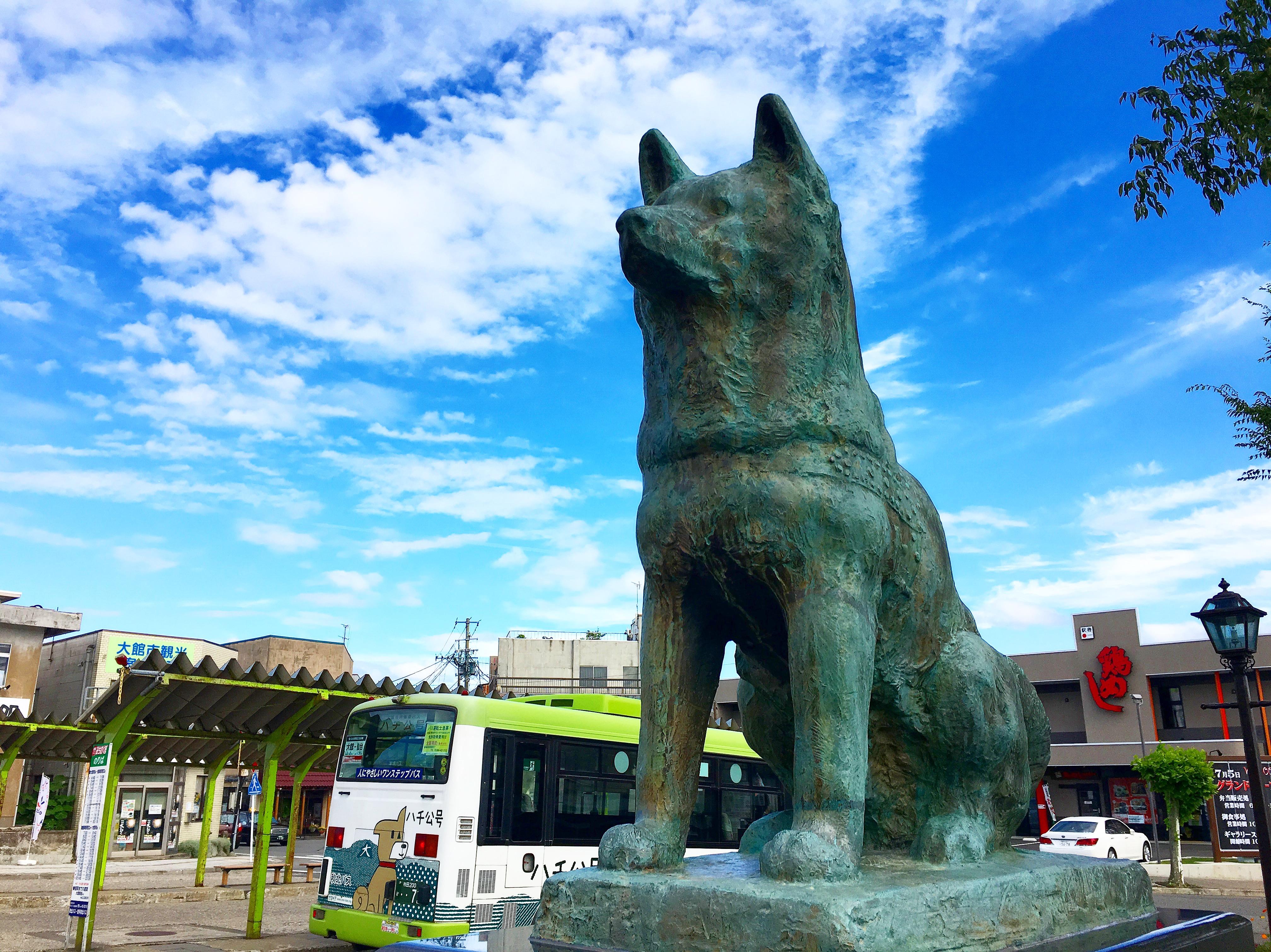 【秋田大館】秋田犬もふもふ!温泉、比内地鶏、きりたんぽの街。